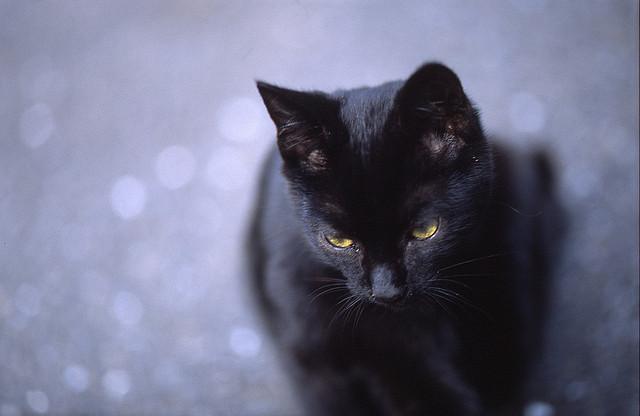 Die verschmuste Katze
